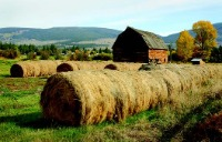 Picture of a field of hay and barn